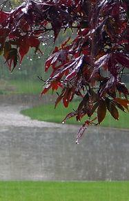 Waiting for the same rain.jpg
