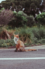 Animal purity.jpg