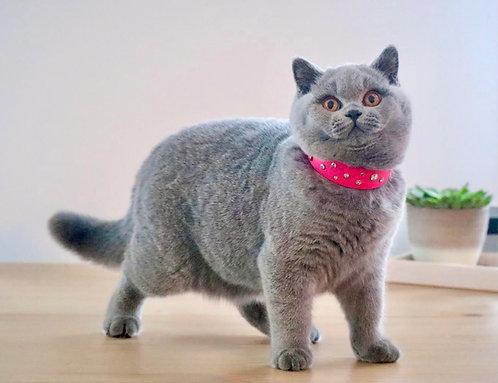 Prestige Light cat necklace