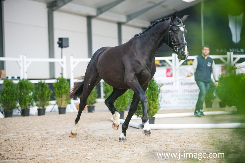 Young Dressage Horses event BWP