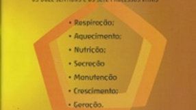 ENSINO DE ANTROPOLOGIA - SUG PARA A EPOCA DO 7º ANO
