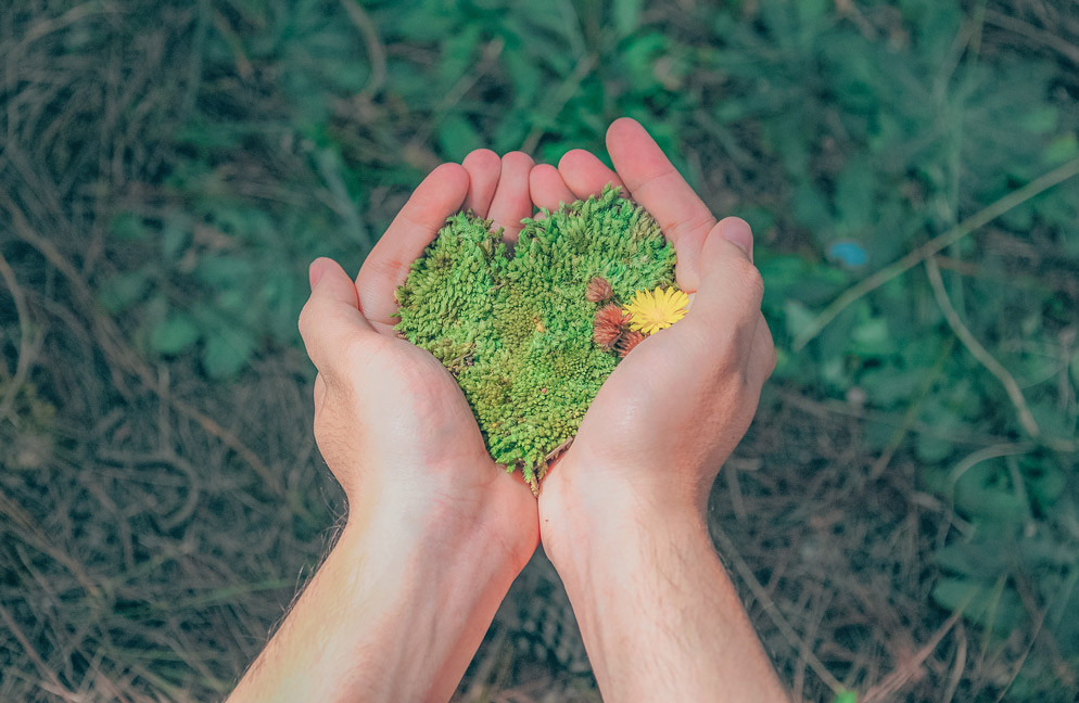 2 Hands holding greenery - heart shape.