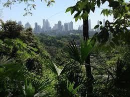 El único Panamá - Week 10