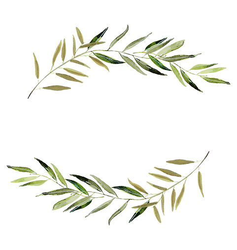 olivebranches.png