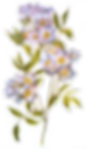 flower-transparent-tumblr-6.png