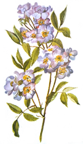 flower-transparent-tumblr-6.png