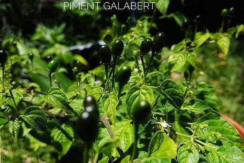 Graines de Piment Galabert