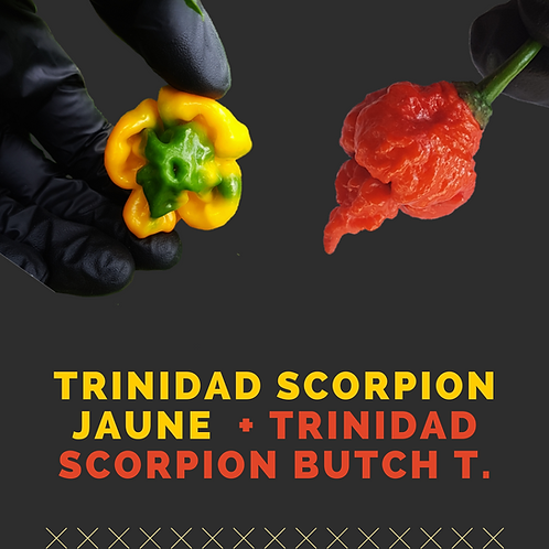 Pack Trinidad Scorpion Yellow + Trinidad Scorpion Butch T