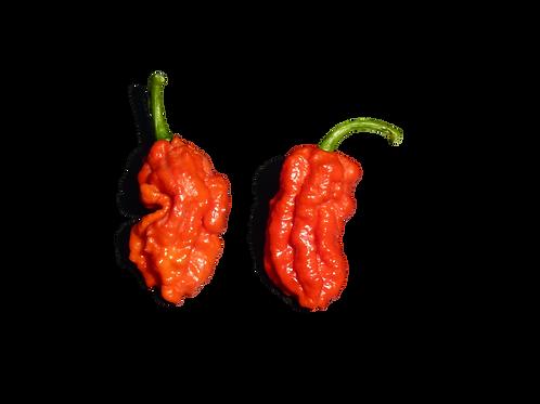 Bhut Jolokia Red (Ghost Pepper)