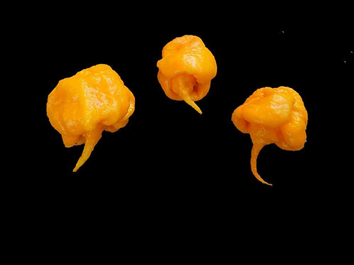 Carolina Reaper Yellow