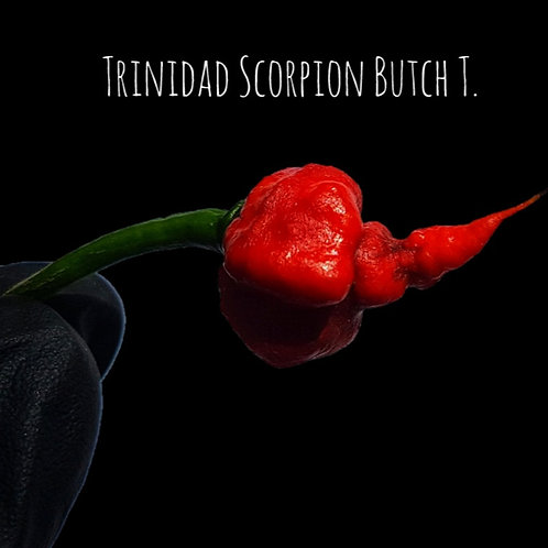 Graines de Trinidad Scorpion Butch T