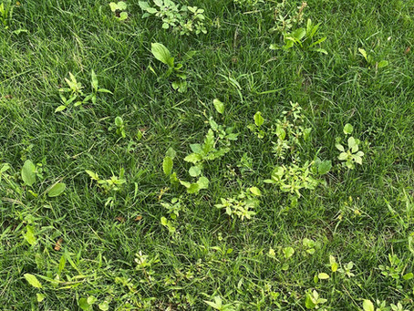 UPDATE: Post-Emergent Herbicide Application