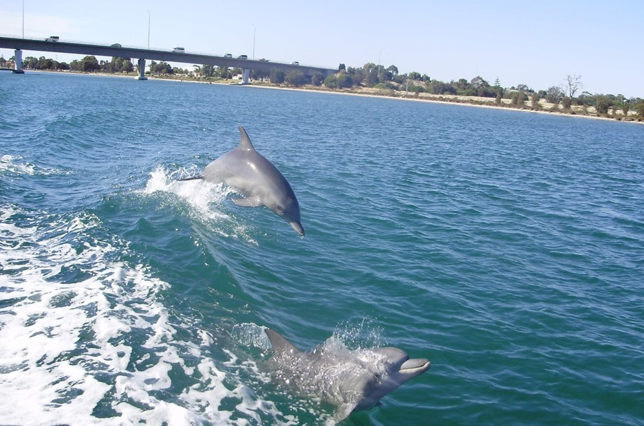 Friendly Dolphins!
