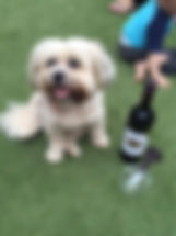 Puppy Happy Hour