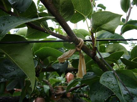 cordón de papel agricultura sostenible