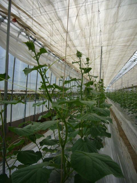 hilo de papel plantas trepadoras
