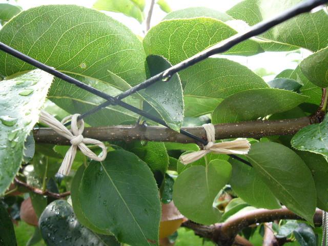 hilo de papel agricultura sostenible