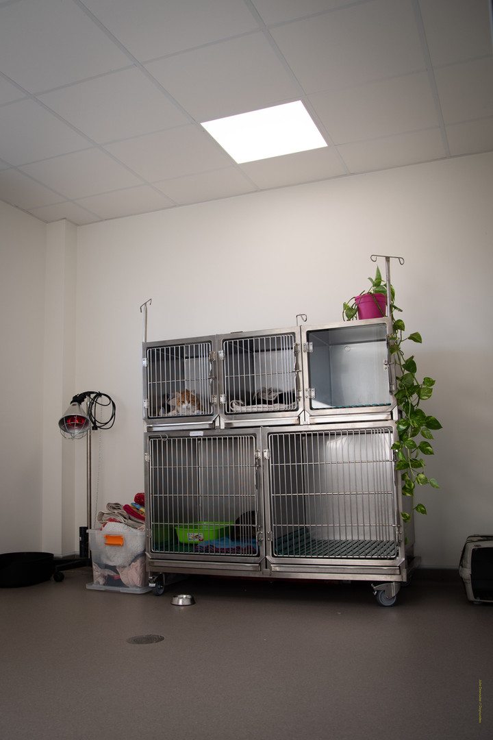 La salle de réveil des chats