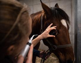 Examen ophtalmologique pour cheval