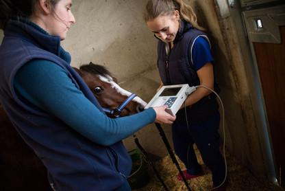 Electrocardiogramme pour chevaux