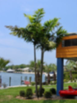 Hurricane Palm.jpg
