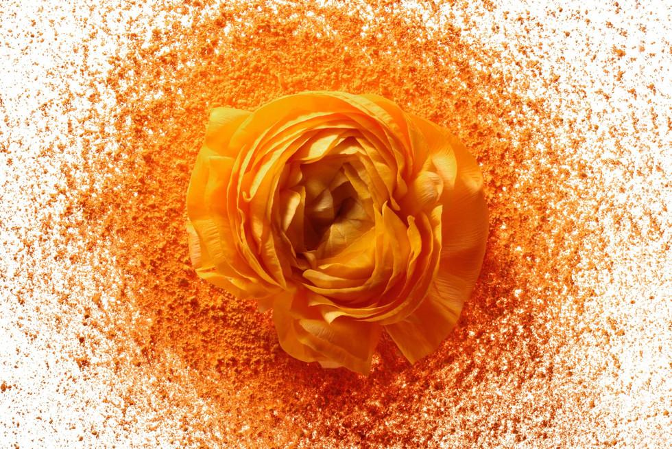Color In Bloom By Kfir Ziv (27).jpg