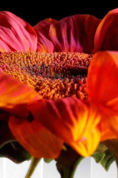 Color In Bloom By Kfir Ziv (7).jpg