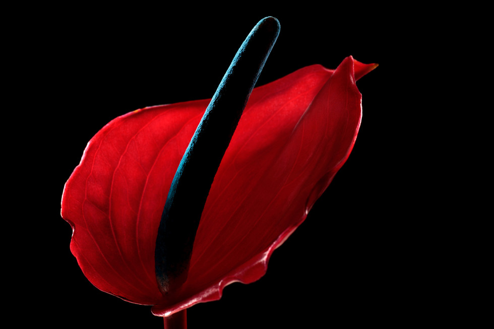 Color In Bloom By Kfir Ziv (4).jpg