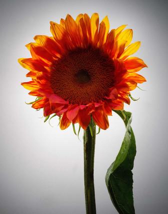Color In Bloom By Kfir Ziv (6).jpg