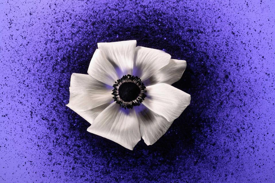 Color In Bloom By Kfir Ziv (23).jpg