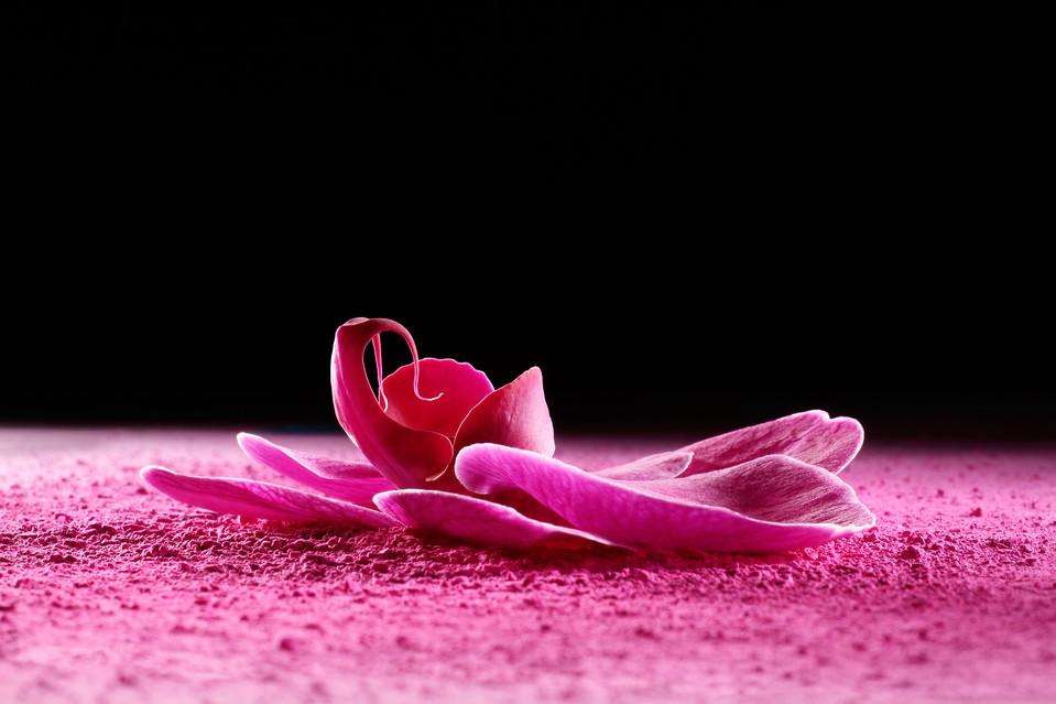 Color In Bloom By Kfir Ziv.jpg