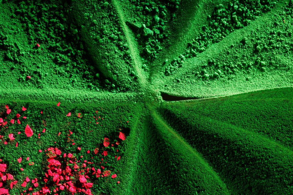 Color In Bloom By Kfir Ziv (17).jpg