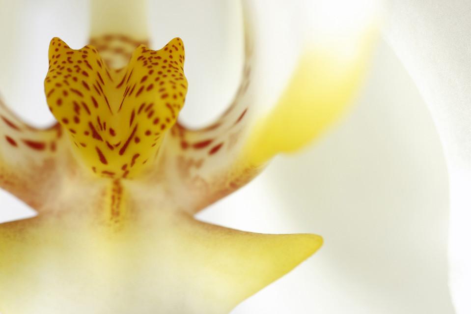Color In Bloom By Kfir Ziv (29).jpg