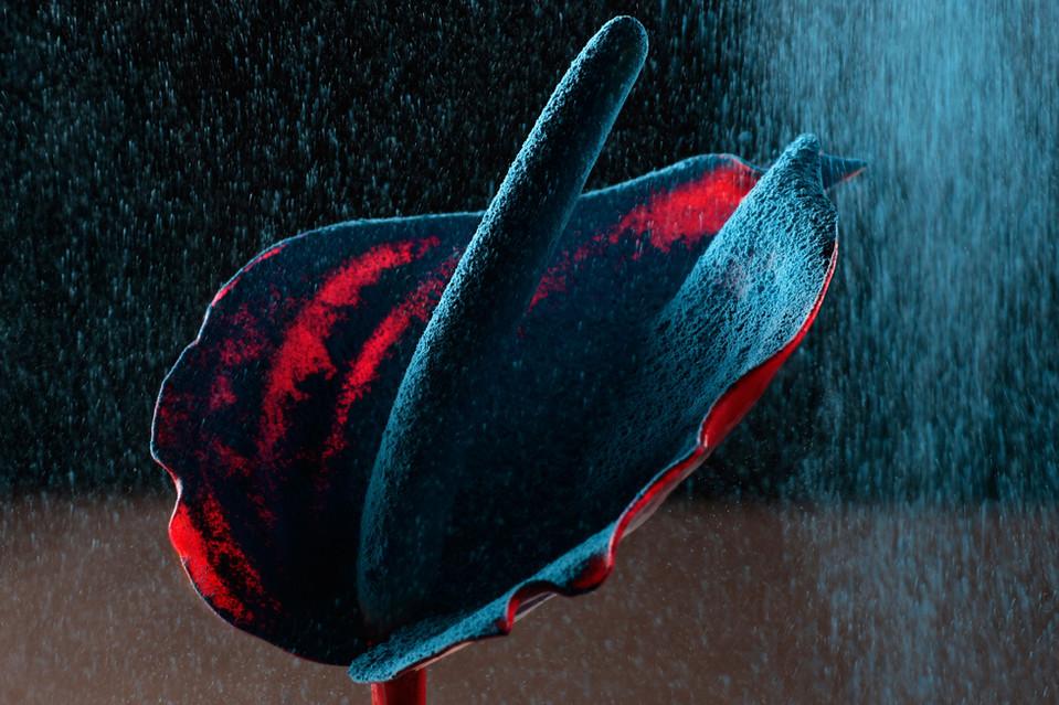 Color In Bloom By Kfir Ziv (1).jpg