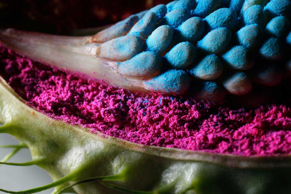Color In Bloom By Kfir Ziv (9).jpg