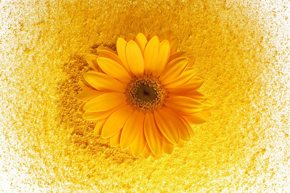 Color In Bloom By Kfir Ziv (24).jpg