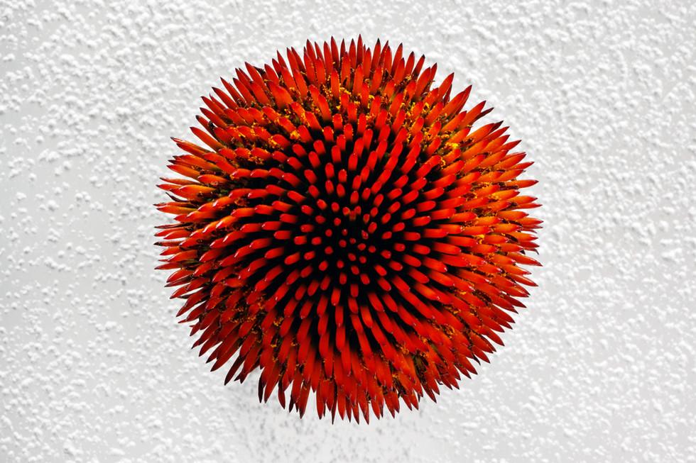 Color In Bloom By Kfir Ziv (13).jpg