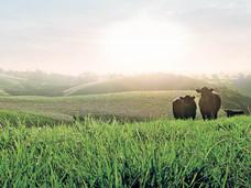 Grass-fed meat & milk healthier in a whole food diet  I  Dr Stephan van Vliet, Duke University