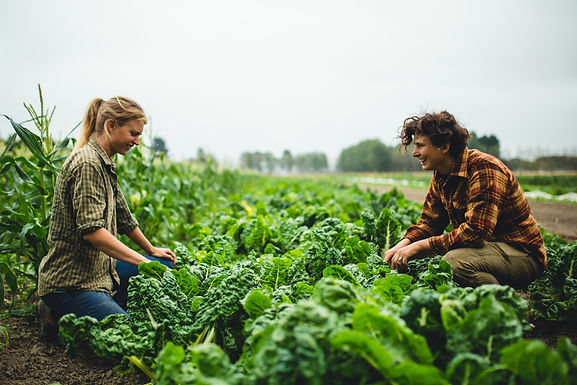 Organic Success