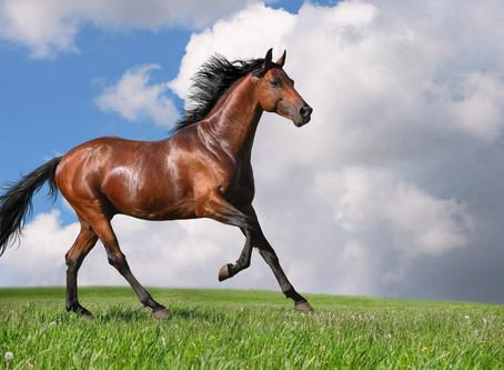 """Los 5 productos """"must have"""" para un caballo"""