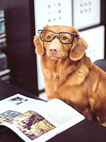 dog sitting in front of book_edited.jpg