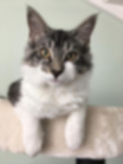 WhatsApp Image 2019-09-03 at 14.14.38.jp