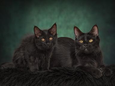 Kybele & Indy (moeder en dochter)