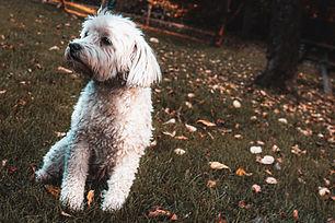 animal-autumn-autumn-leaves-2342242.jpg