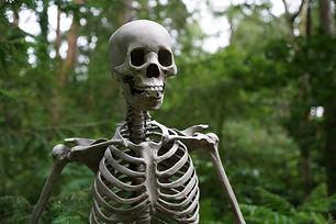 anatomy-blur-bones-1528375.jpg