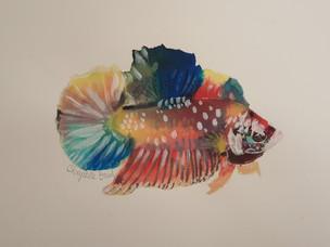 Poisson combattant - Aquarelle sur papier Hanemühle + cadre sous-verre