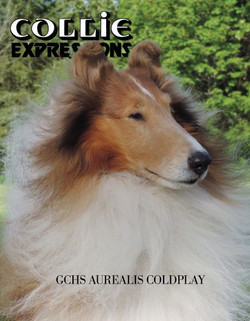 Collie Expressions Cover