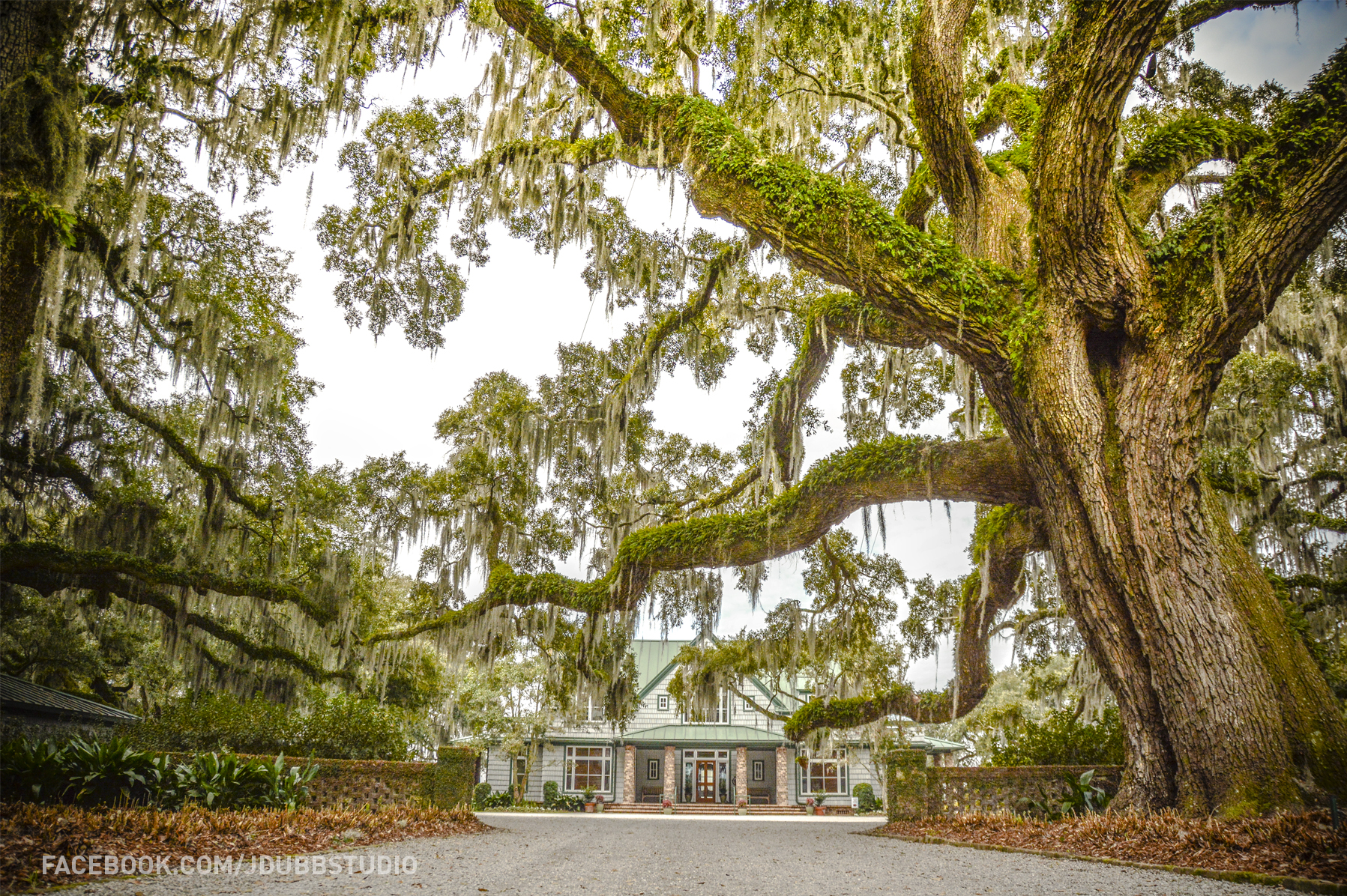 Mackay Point Plantation