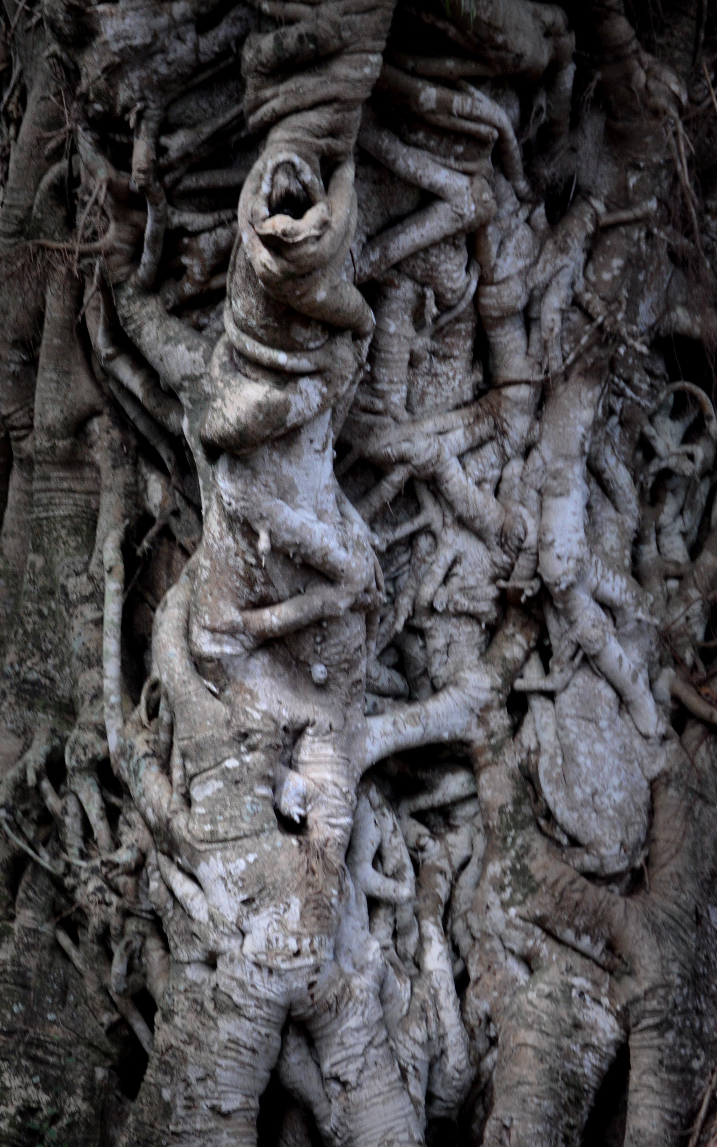 Tanna Tree Trunk