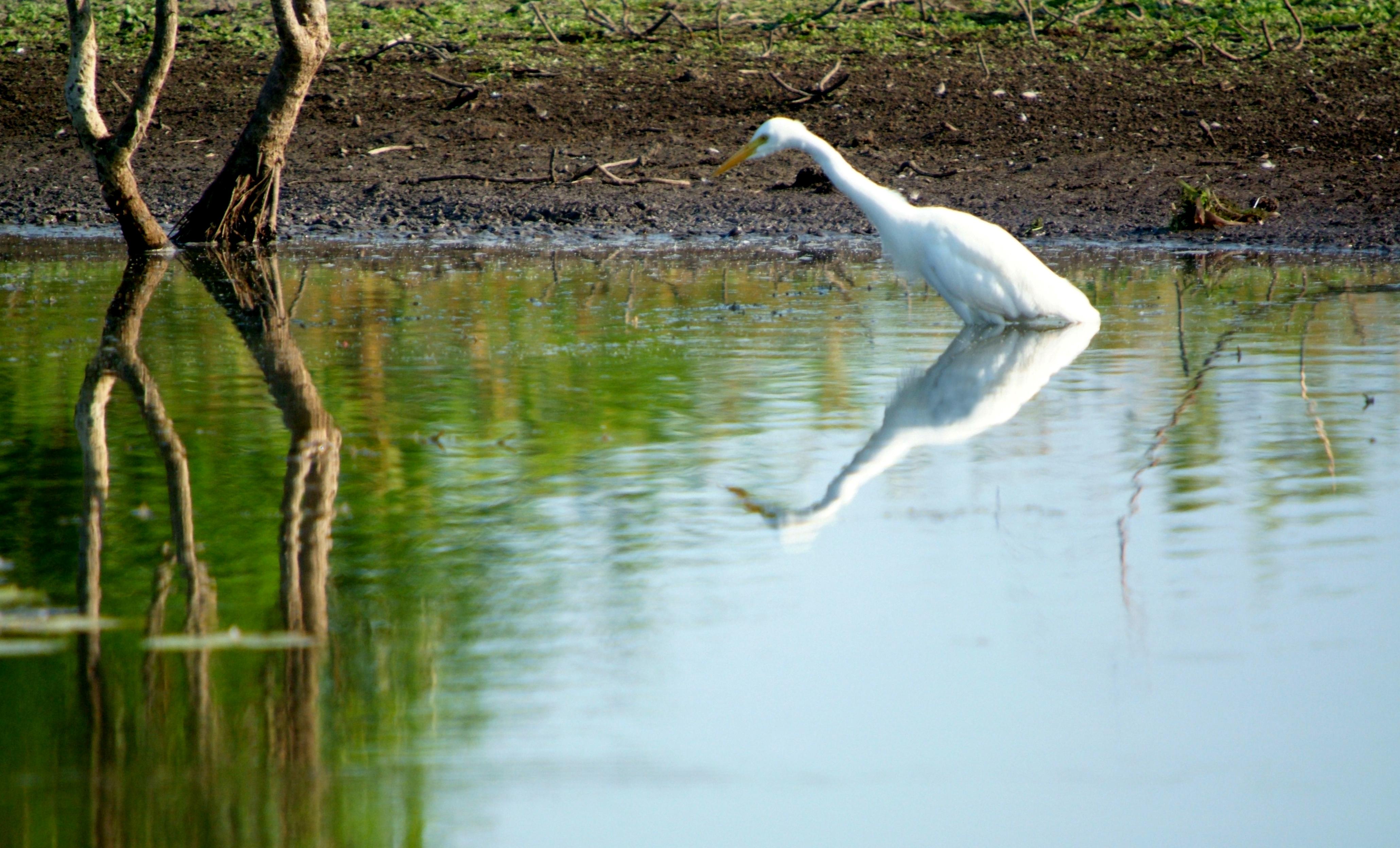Billabong Bird Reflection